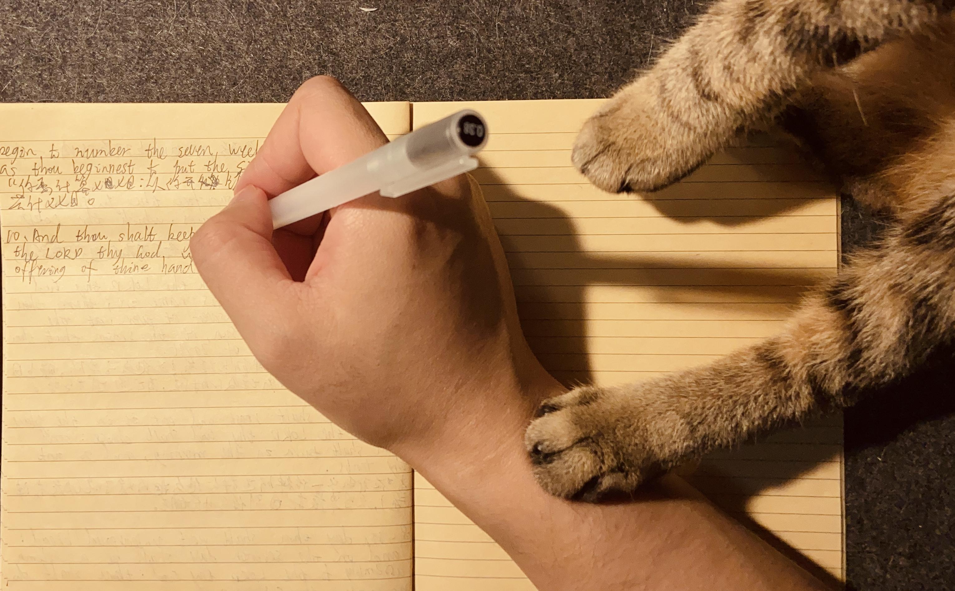 闷墩儿曾经是一只流浪猫,直到遇见爱拍美食和写作的小山。有一天萧山邀请你去参加他猫的生日晚会,你不喜欢猫,该怎样拒绝呢?